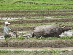 Pengertian dari Pertanian Indonesia