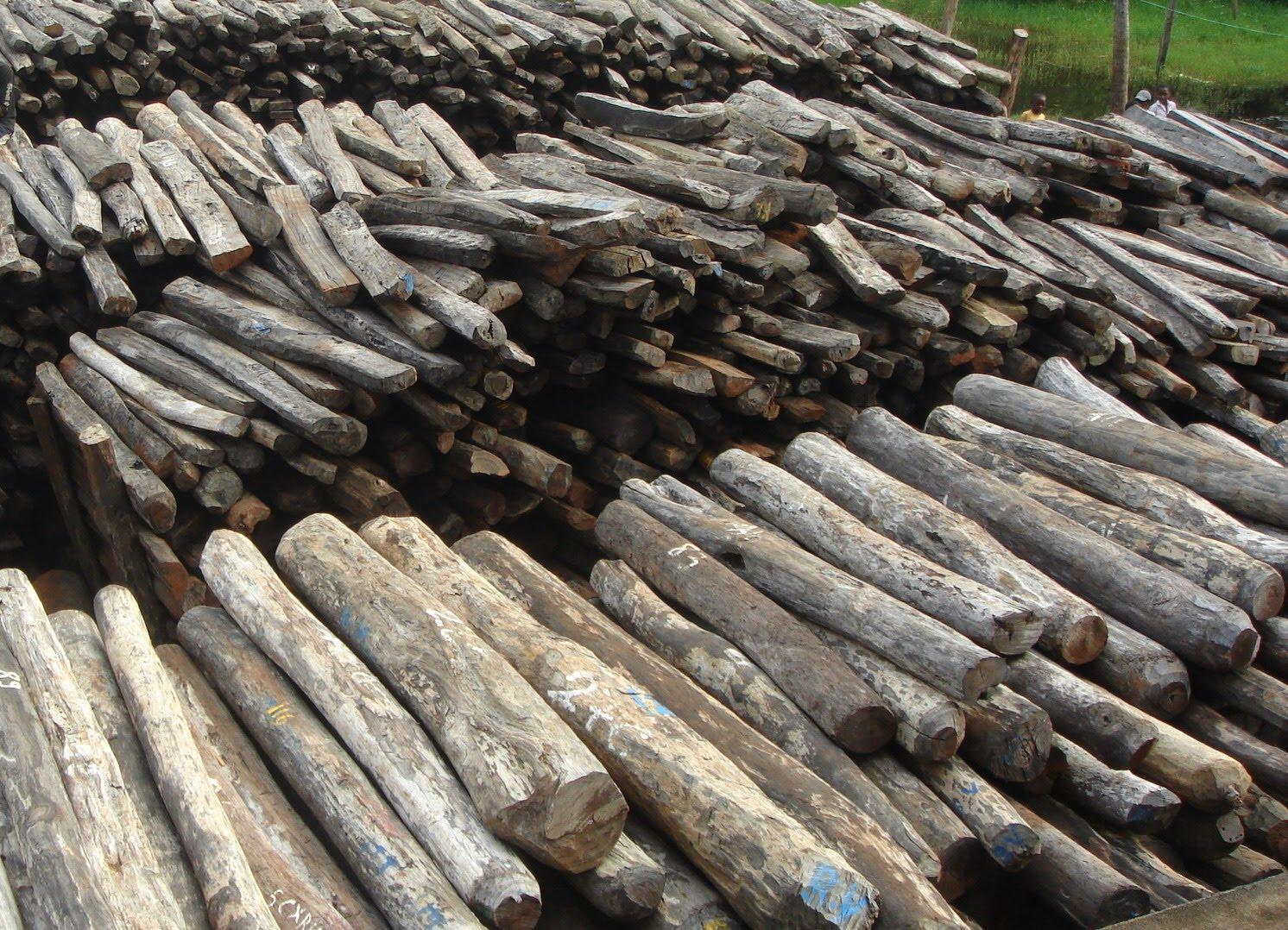 VAOVAO MALAGASY Les bois de rose de Madagascar, encore épiés ~ Bois De Madagascar
