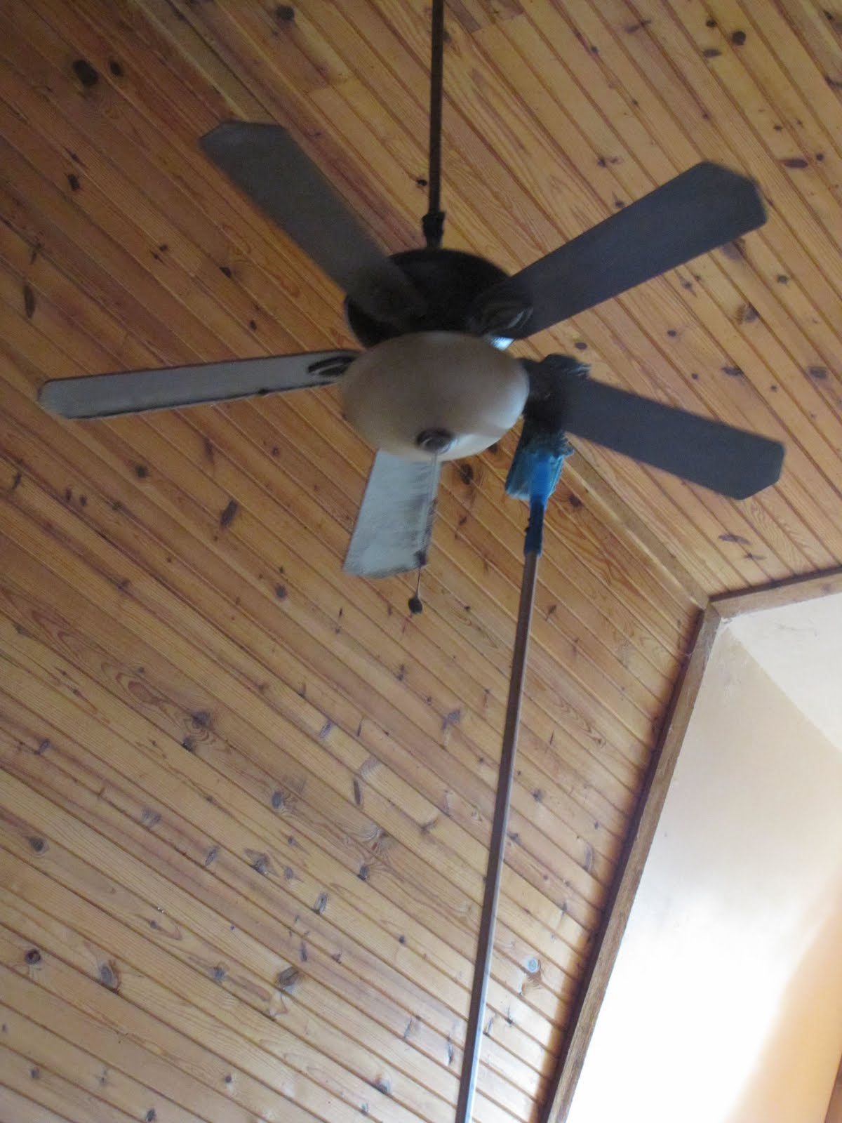 Life In The A-Frame: I'm a Fan of the Fan- cleaning- tool