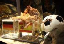 El pulpo Paul apuesta por España ante Alemania