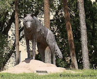 University of New Mexico Wolf statue on campus.