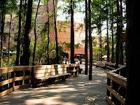 tree lined walkway on the University of Central Florida with brown wooded handrails.