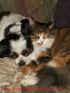 Cat and dog napping together.