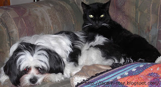 cat and dog cuddled up