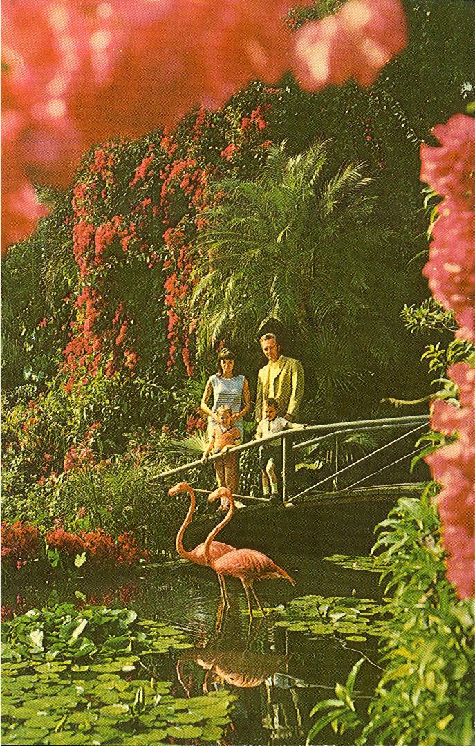 Vintage Travel Postcards St Petersburg Florida