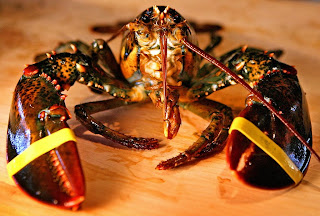 That Lobster is How Old?! - Blog - Gulf of Maine Research Institute