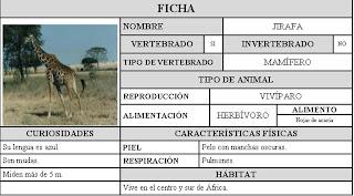 jirafa caracteristica:
