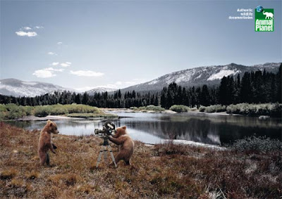 animal q Astonishing Animal Advertisements Creating Awareness