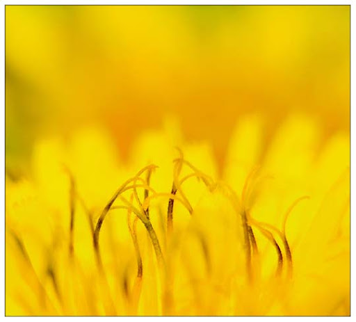 yellow by inner light Colors Around Us: Yellow Photography Inspiration