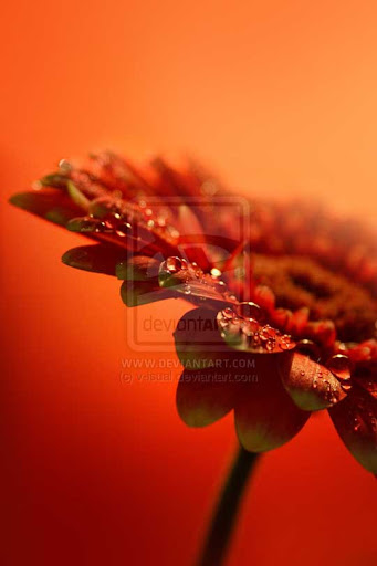 Deep Orange by v isual All Things Orange | Color Photography Inspiration #2