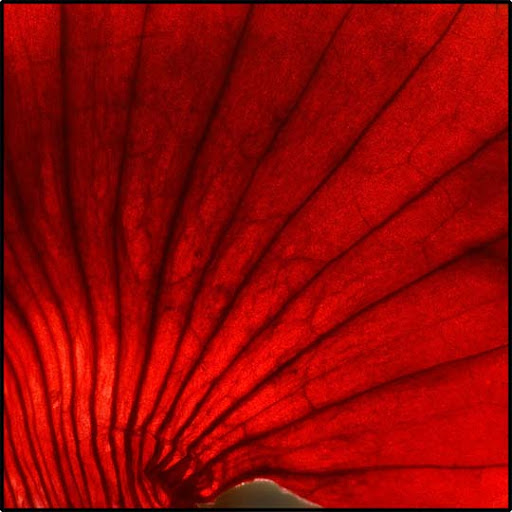 red by i shadow Gorgeous Red Color Inspired Photography