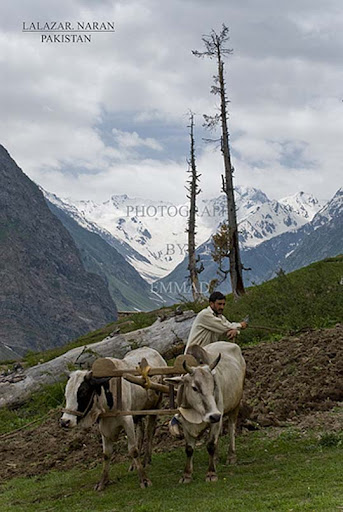 Lalazar,+Naran+ +Pakistan The Beauty of Pakistan: 70 Amazing Photographs
