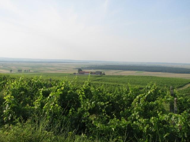 Viile din dealul Starmina si crama