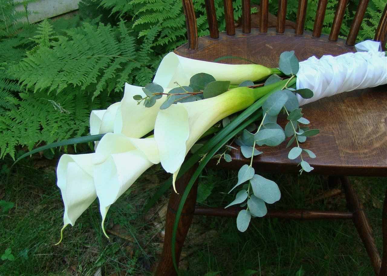 Фото цветов на длинной ножке