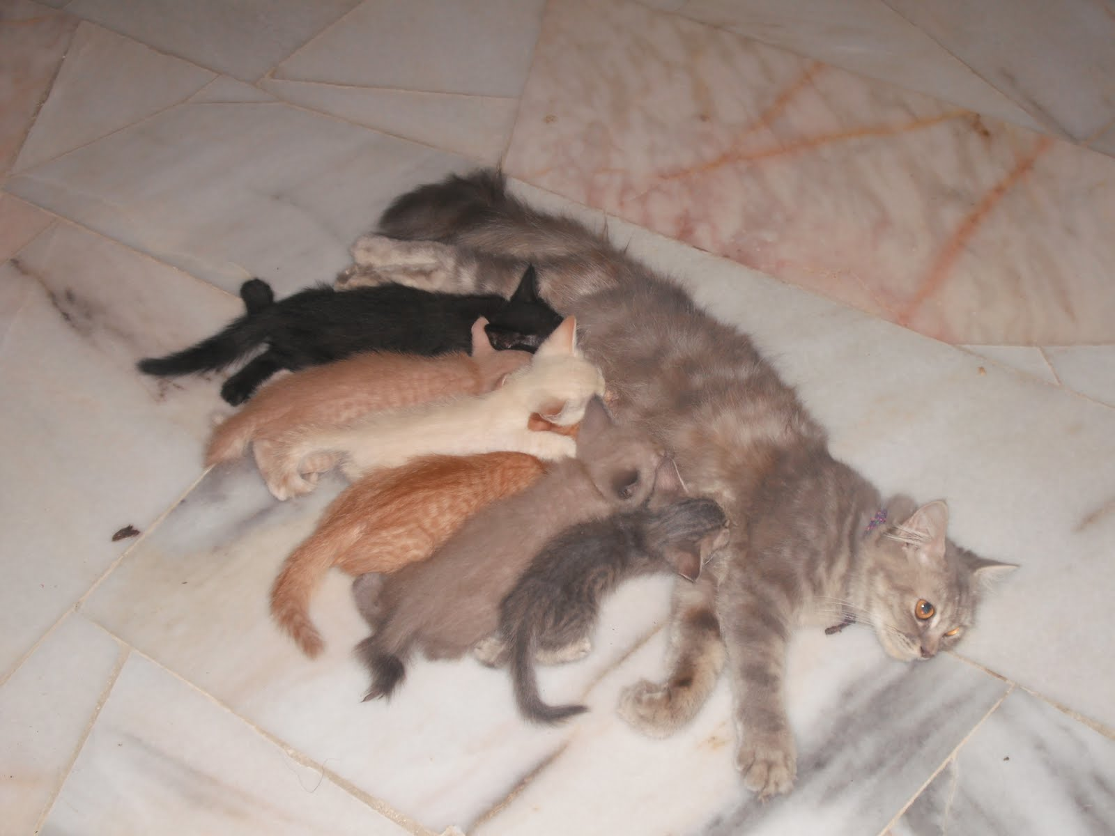 Hidup Bagaikan Satu Perlumbaan Sedangkan Kucing Tau