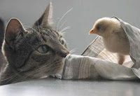 Cats with other animals