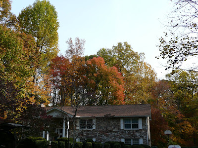 Fall colors and trees in Northern Virginia