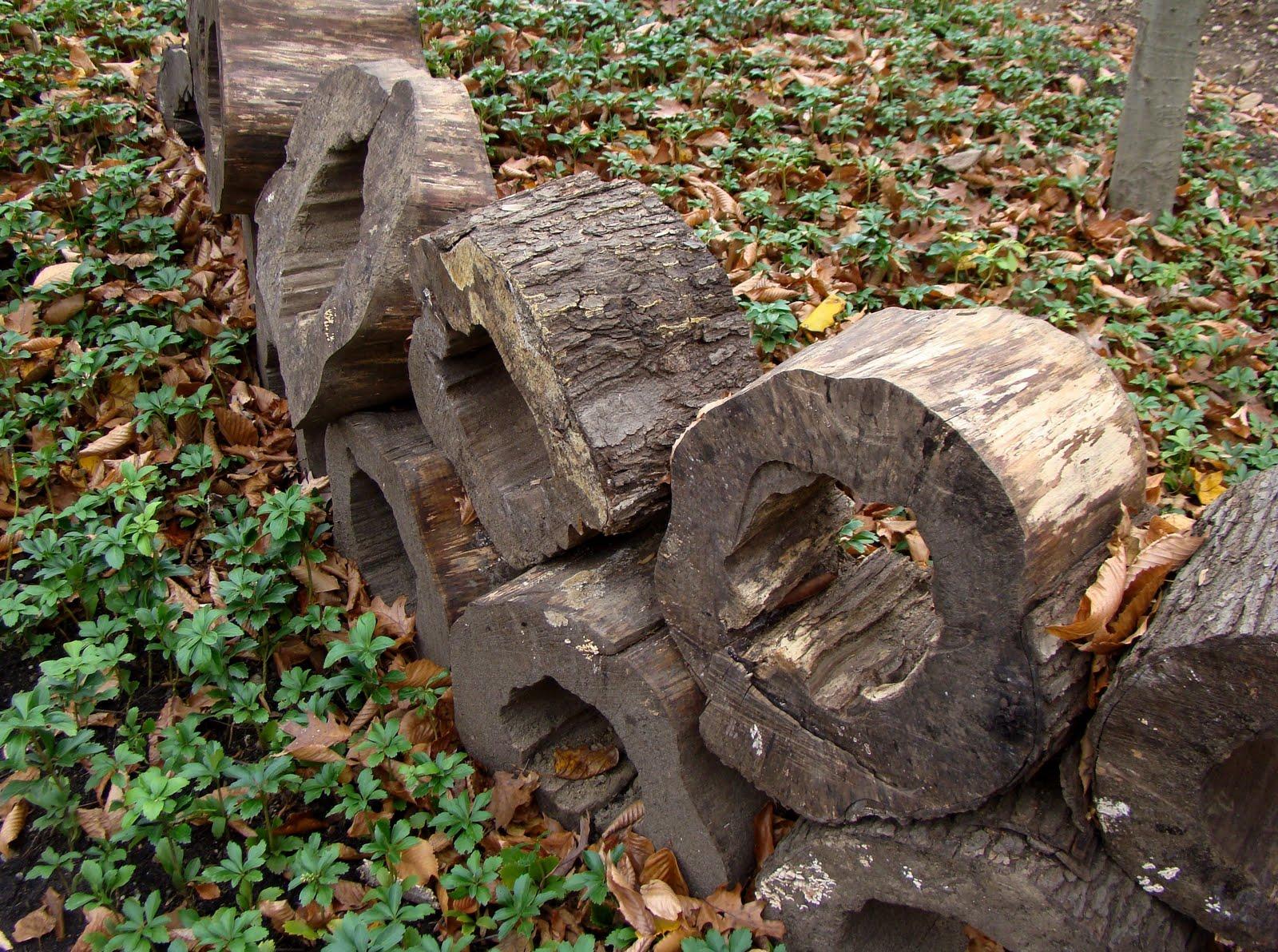 Tree Stump Poetry
