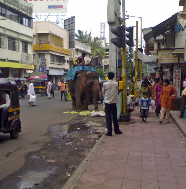 elephant eating corn peels on road