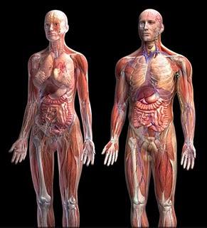 keunikan tubuh manusia, hal menakjubkan dalam tubuh manusia