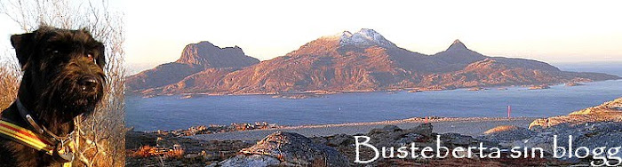 Busteberta sin blogg