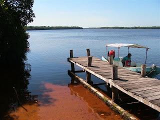 Paysages du Mexique - Celestun - mangrove