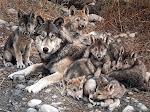 Τα βουνά των Λύκων!