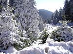 Άμεση ίδρυση φυσικού πάρκου Βαρδουσίων-Οξυάς-Κραβάρων!