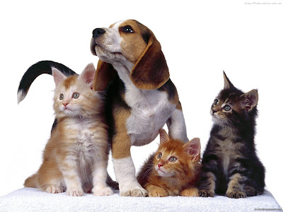 funny dog wallpaper. funny cat wallpaper