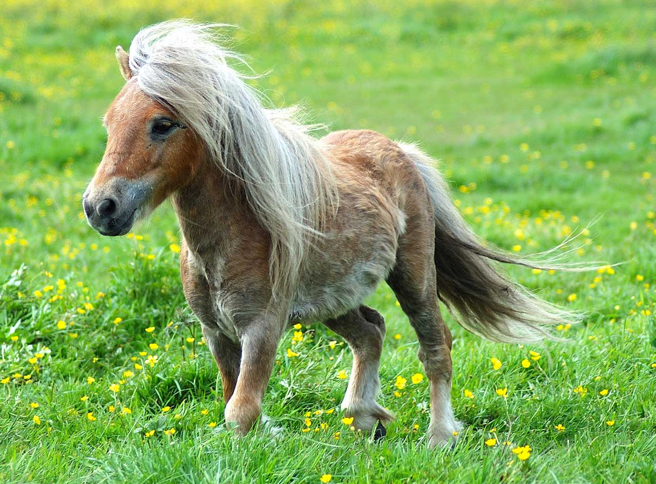 http://4.bp.blogspot.com/_62Lrfx74axc/TLwXe3P0LgI/AAAAAAAAAzk/GM-gmKFmjhw/s1600/cool-pony.jpg