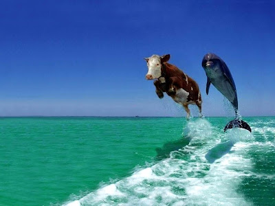 cow-and-dolphin-fake-comedy-funny-animal-wallpapers_1024x768.jpg