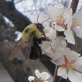 [bees+103.JPG]