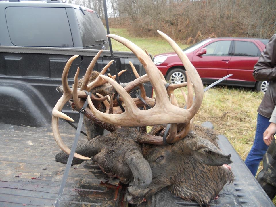 Hunt Plots Inc Crazy Buck Fight Pics From Ohio