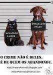 Não abandone o seu animal!!
