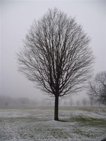 [fog.aspx]
