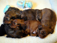 Puppy Nursery