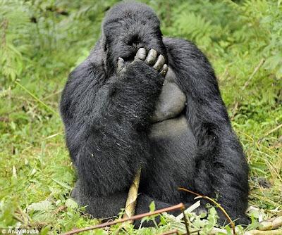 Drunken Gorillas 3