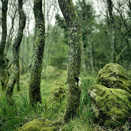 [Landscape_2_Moss+Forest.jpg]