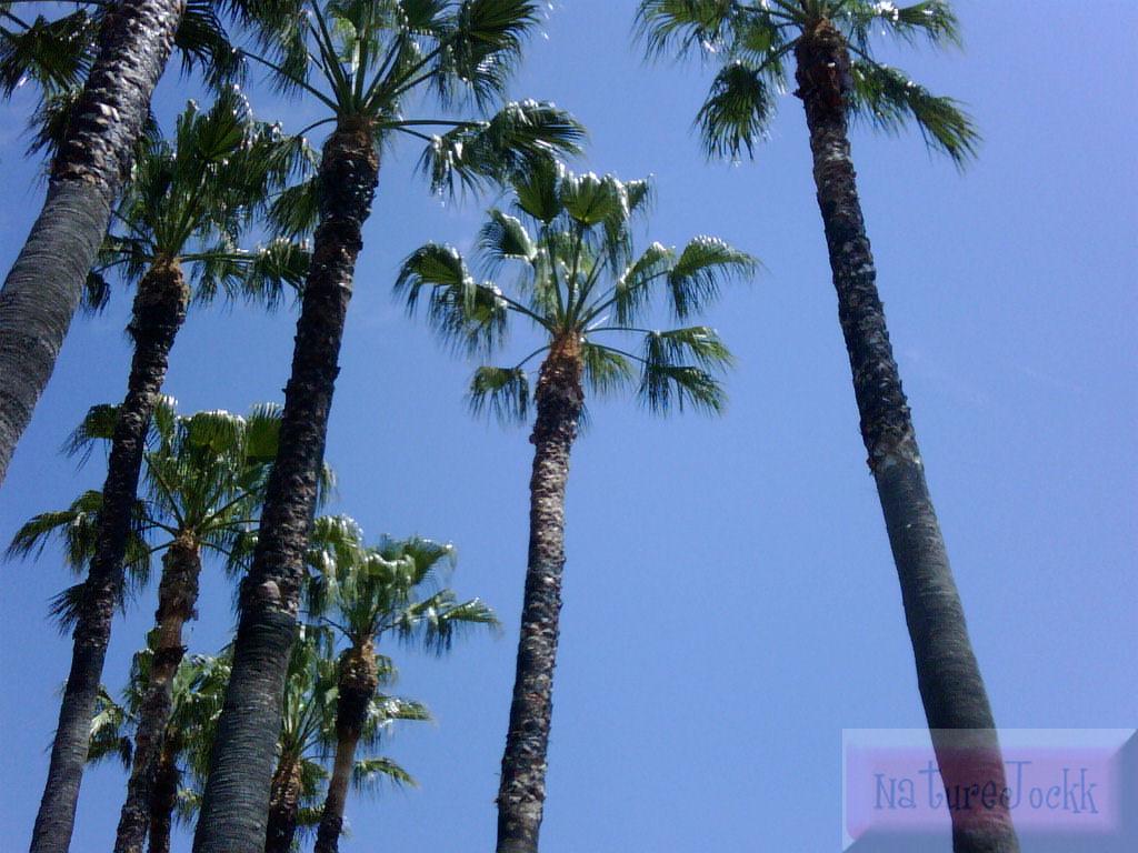 [Palm+trees_1.jpg]