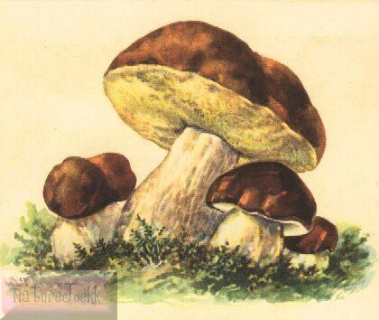 [Mushroom_1.jpg]