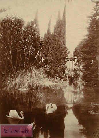 [Gloeden,_Wilhelm_von_(1856-1931)_-_n._0151_-_Villa_Tasca,_Palermo_-_Fotomontaggio_con_cigni_-_1909_-_inet.jpg]