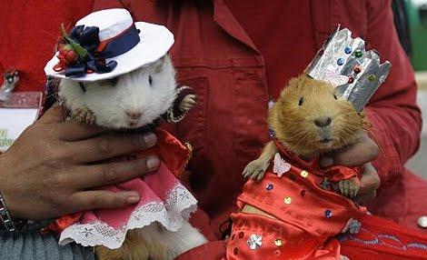 Guinea Pig Fashion Show Tim Gunn