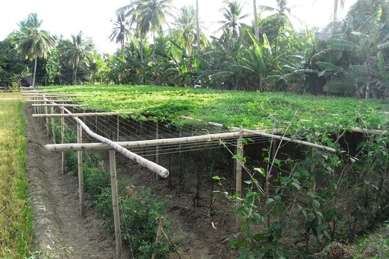 organic and conventional farming essay