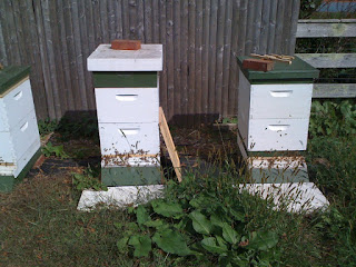 bee hives prepared for winter