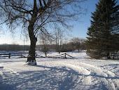 Hentennial winter