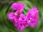 flores singelas tem uma beleza suave