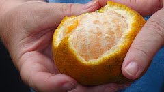 just want you to see what a real lemon looks like!
