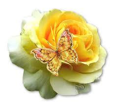 http://4.bp.blogspot.com/_6FeL7R7tM6w/TNu6g92dq2I/AAAAAAAAAv0/Z6im6jJfes8/s1600/rosa+con+farfalla.jpeg