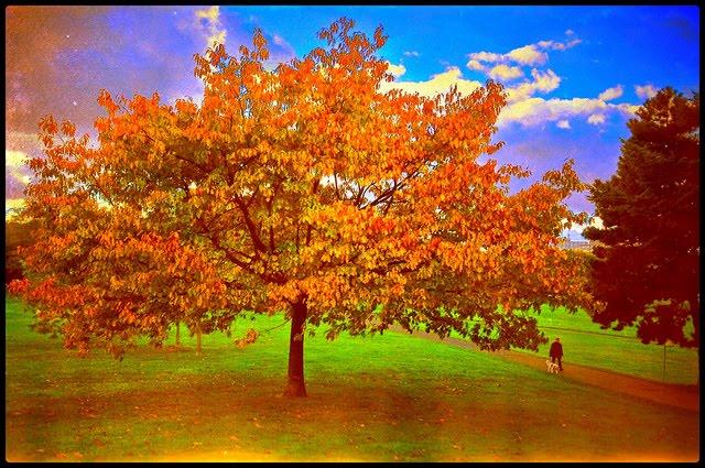 Evry Daily Photo - le parc Henri Fabre en automne - Evry