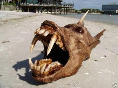 weirdfish02
